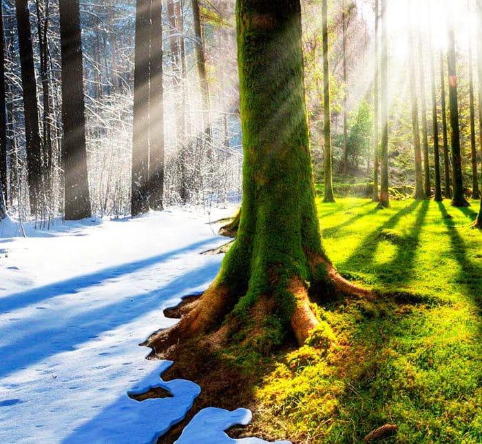 Зимний лес или летний ?